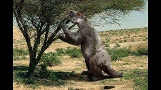 Самые гигантские животные которые когда-то жили на земле.