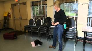 Tip Tuesday: House Training a Puppy
