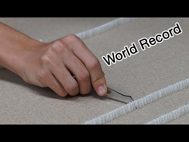 Guinness World Record - Most mini dominoes toppled