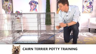 Cairn Terrier Potty Training from WorldFamous Dog Trainer Zak George   Train a Cairn Terrier Puppy