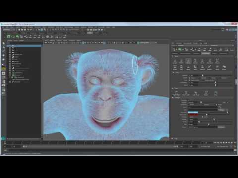 CGI 3D Tutorials : Expert Over The Shoulder Grooming Chimpanzee Fur With XGen Part 1 YouTube