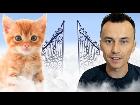 Will Our PETS Go to HEAVEN with Us?