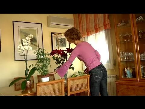 C mo adornar tu casa con plantas youtube for Vestir una pared con plantas