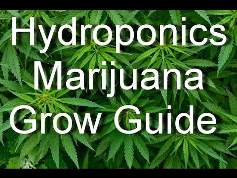 Marijuana Legalization - Marijuana Hydroponics Grow Guide - Grow Top Quality Marijuana