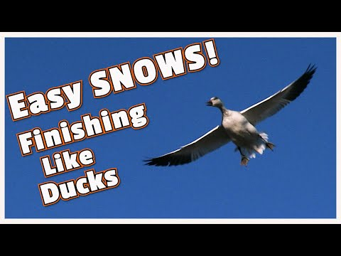 Best Snow Goose Hunt In 33 Years! | High Quality