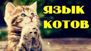 ТЕСТ Понимаете ли вы КОШАЧИЙ язык? О чем думает ваша кошка?!