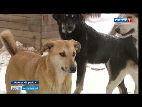 Жительница Бежецка спасла более 350 животных