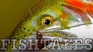 FishTales: POOL TROUT FISH-OUT