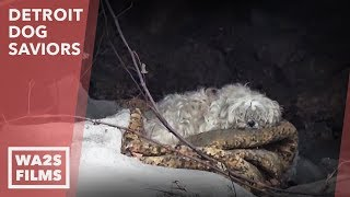 We Couldn't Believe What We Discovered Following This Dog Acting Weird  Hope For Dogs | My DoDo