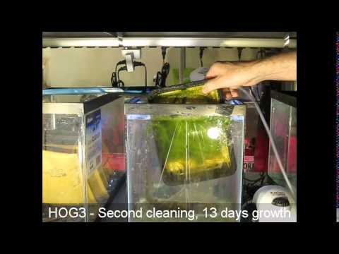 Santa Monica Filtration HOG3 Upflow Algae Scrubber - First three cleanings