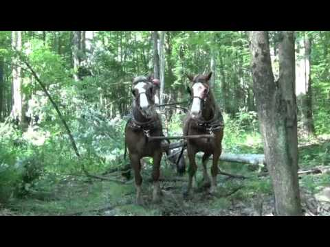 Logging with Horses - Hickman Lumber