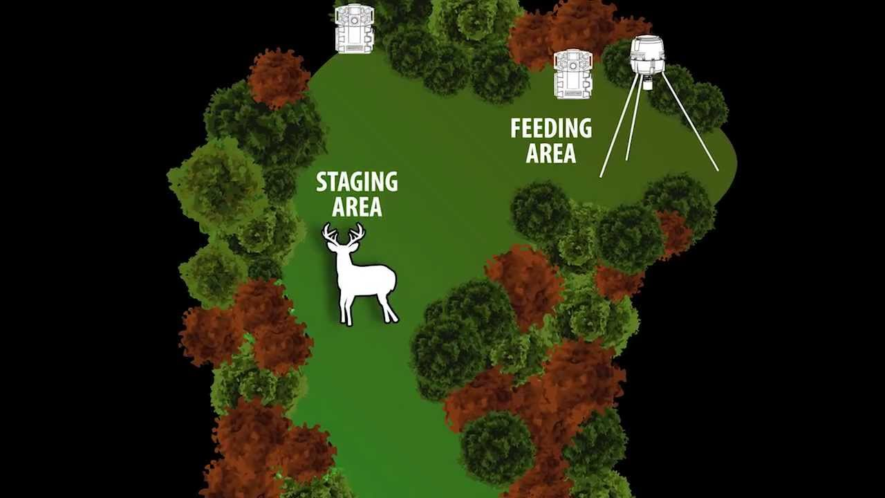 Blog - How to Set Up Your Deer Feeder This Season