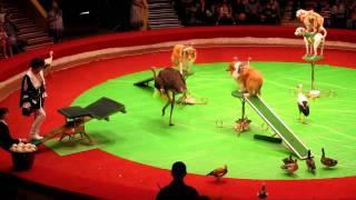 Circus Animal Act  Kazan, Russia