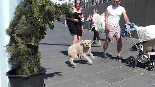 Dog scared to death | Bushman Prank