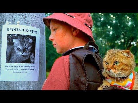 ПРОПАЛ КОТ!!! Рыжий ПРЯЧЕТ кота!!!