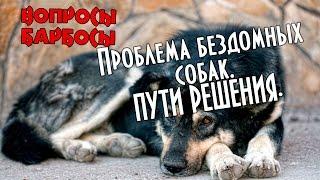 Как решить проблему бездомных животных(, 2016-04-11T20:32:10.000Z)