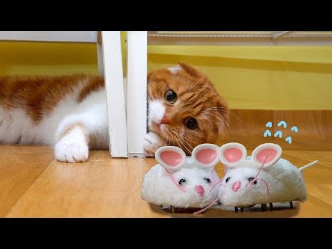 고양이 vs 쥐돌이 vs 아기 CAT vs Mouse toy vs Baby [SURI&NOEL]