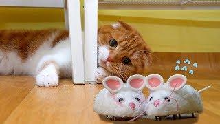 쥐 두마리가 수리노을 가족 집에 오게 되는데... 재미있게 보셨다면 [공...