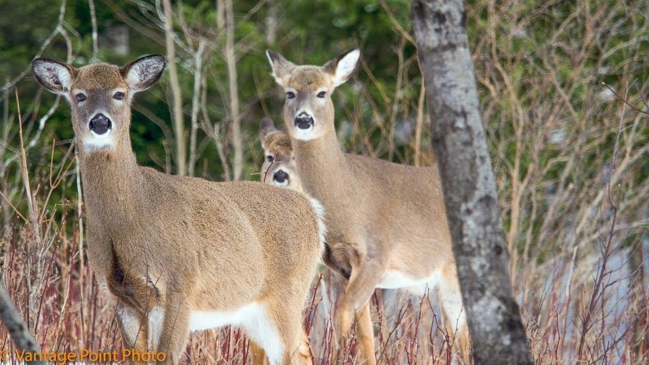 My Micro 4/3Rds Wildlife Photography System... Olympus & Panasonic