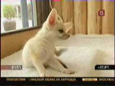 ПТИЧИЙ РЫНОК / милые собачки и котики - YouTube
