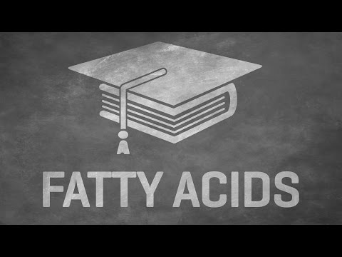 Essential Help guide to Fat