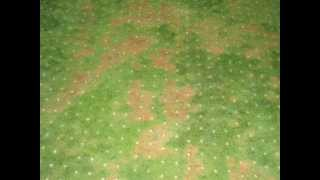 Fall aeration and disease