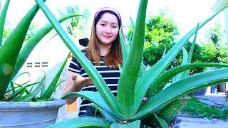 Yummy Aloe Vera Jelly Cooking - Aloe Vera Jelly - Cooking With Sros