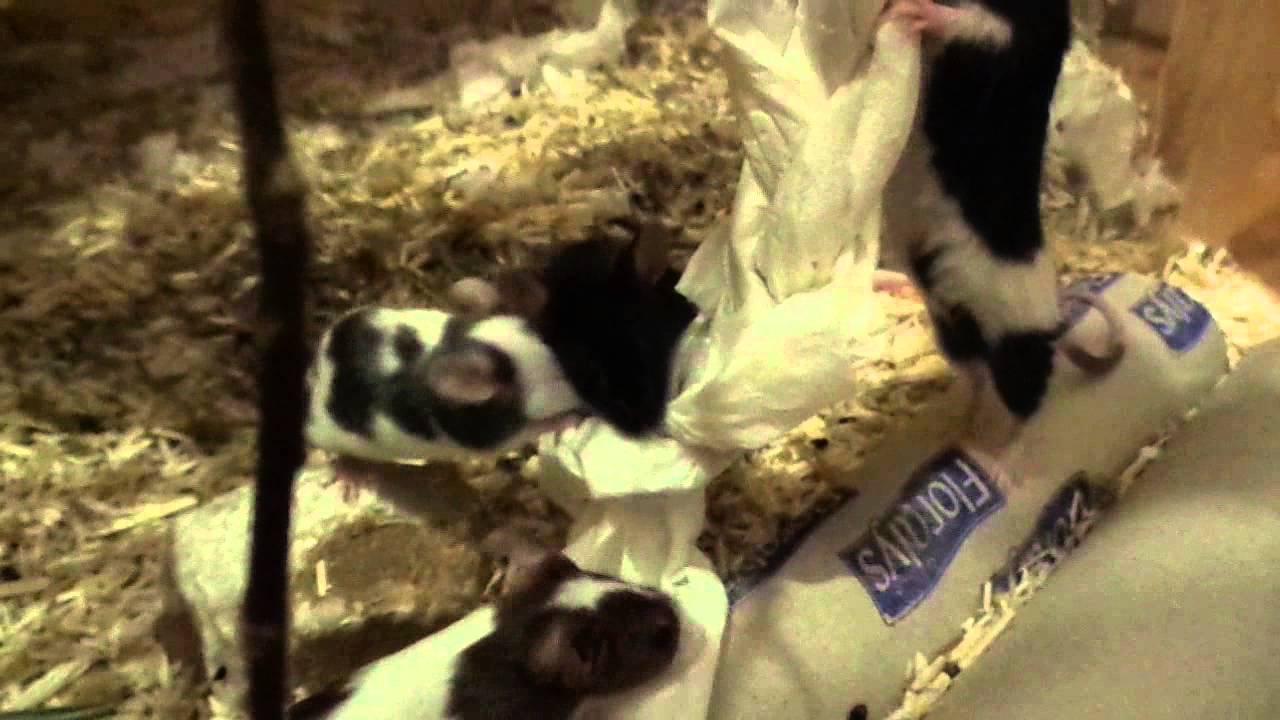 Futtertherapie spielzeug für mäuse teil youtube