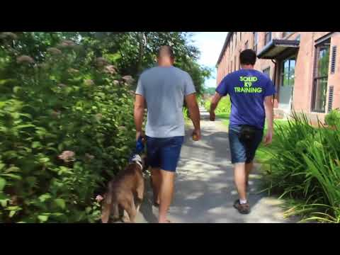 Dog Board and Training Drop Off | Dexter's Pick Up