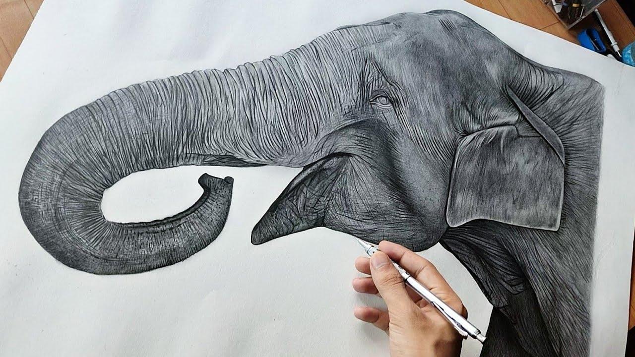Drawing Elephant A1 Size | Timelapse 🔥