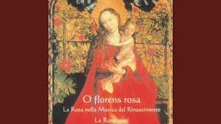 O Rosa Bella