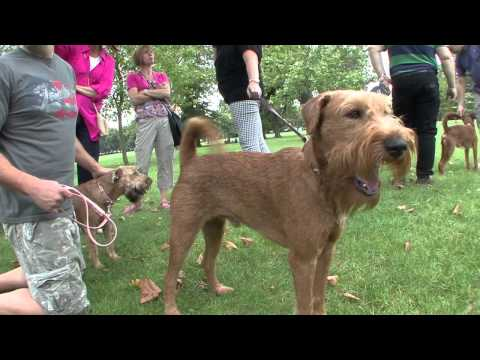Irish Terriers: Paws In The Park (full length version)