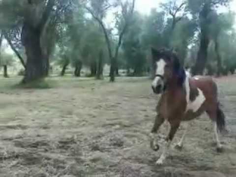 Come Costruire Un Cavallo.Come Fare Un Tondino A Un Cavallo Youtube