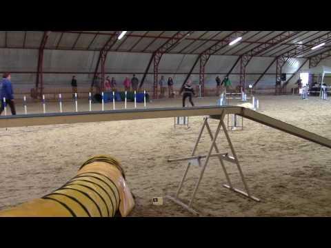 Irhaberki Oskola Tisza A1 agility