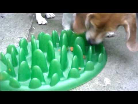 Slow Green Feeder Vs Maggie