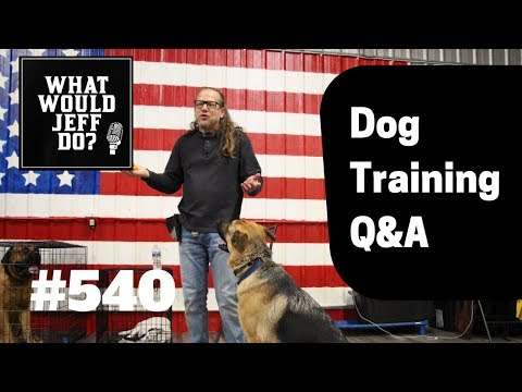 training-an-anxious-dog-|-stop-biting-|-what-would-jeff-do?-dog-training-q-&-a-#540