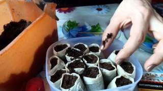 Сажаем семена цветов Антирринум F1 примула (мелкопыльные) в чайные пакетики(На видео представлены семена: Примула каскадная (яркая смесь) раннецветущее растение. Растет в виде рыхлого..., 2016-03-13T15:59:05.000Z)