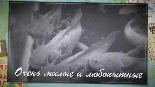 АКСОЛОТЛЬ В МАГАЗИНЕ Ribdom.ru