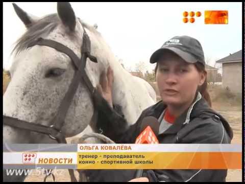 конно спортивная школа
