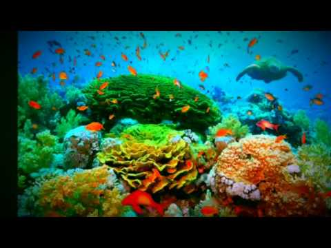 Coral Reef- Industrial Pollution/Nuclear Testing