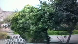 tepeyanco tlaxcala