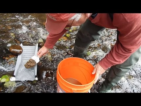 S2E14 Washington State Gold Mining - Small Creek Prospecting wth Pete