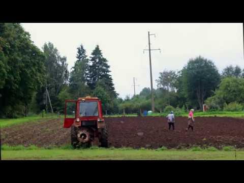 Potato Picking in Tuula Estonia