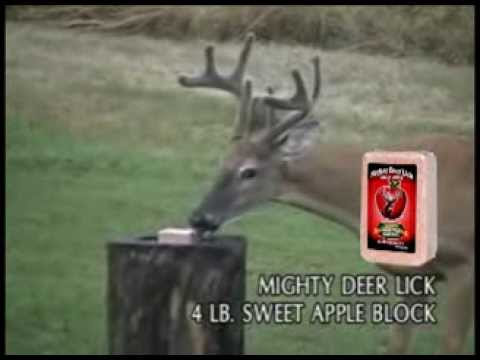 Mighty deer licks join. All