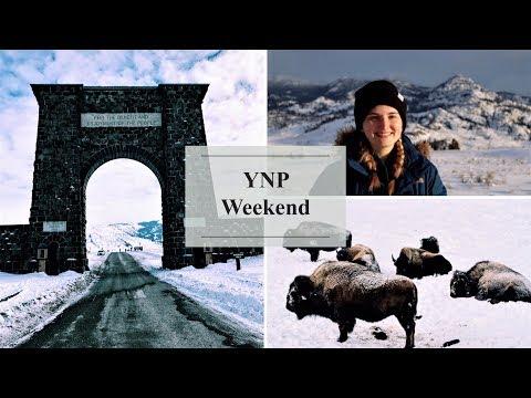 Watching Wildlife | Yellowstone National Park