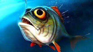 видео Определения возраста рыб