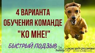 """Как научить собаку команде """"Ко мне""""? 4 варианта подзыва, если собака не подходит к хозяину"""