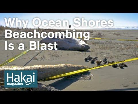 Why Ocean Shores Beachcombing Is A BLAST