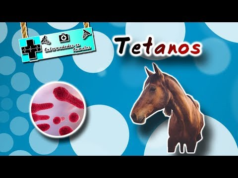 tetanus-(the-disease-of-the-trestle)-|-animal-diseases-|