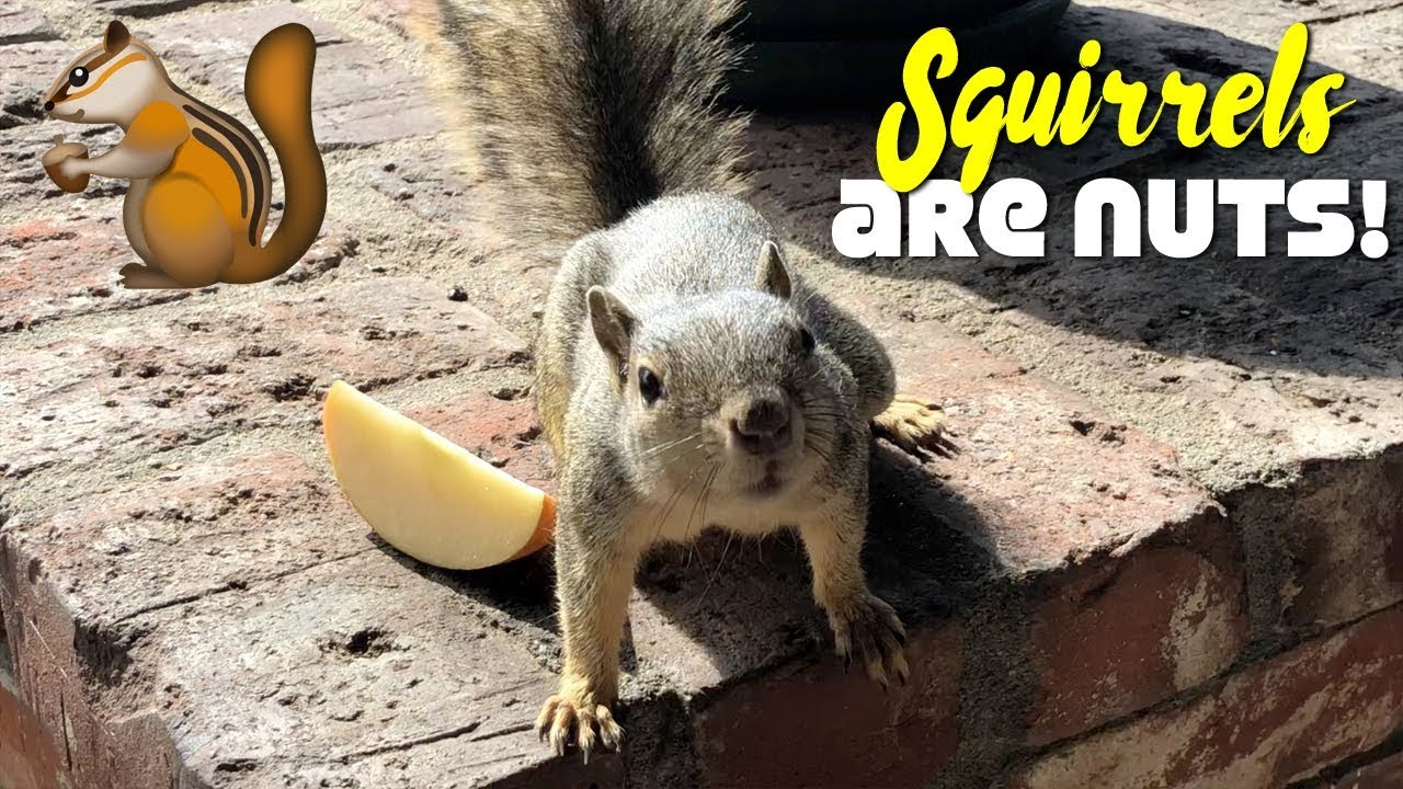 Squirrels Go Nuts on our What We Ate In A Day Vlog